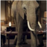The Elephant in Your Living Room