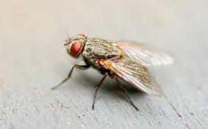 Read more about the article Would You Hurt a Fly?