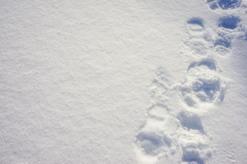 The Footprints You Make!