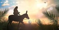 Jesus Chose a Donkey!