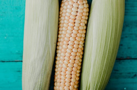 The Three Ears of Corn!