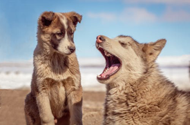Read more about the article Two Wolves!